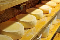 Forms of cheese Royalty Free Stock Images