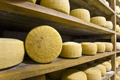 Forms of Pecorino. View of an inside of a dairy with racks full of forms of Pecorino Stock Photography