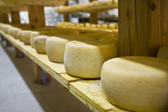 Forms of Pecorino Stock Images