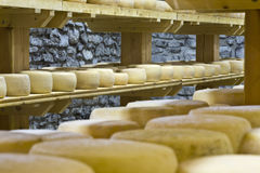 Forms of Pecorino. View of an inside of a dairy with racks full of forms of Pecorino Royalty Free Stock Photography