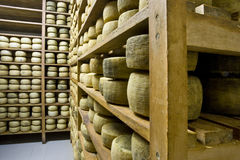 Forms of Pecorino. View of an inside of a dairy with racks full of forms of Pecorino Stock Image
