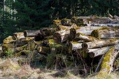 Formteilbäume Stockfotografie