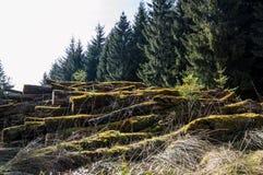 Formteilbäume Lizenzfreies Stockfoto