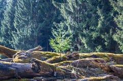 Formteilbäume Lizenzfreie Stockbilder