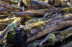 Formteilbäume Lizenzfreie Stockfotografie