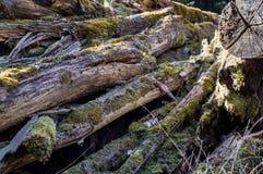 Formteilbäume Stockbilder