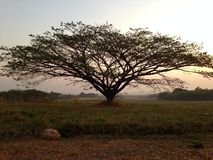 Formulário perfeito da árvore Fotografia de Stock Royalty Free