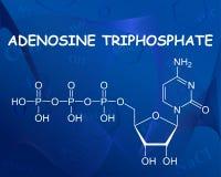 Formula chimica dell'adenosina trifosfato illustrazione di stock