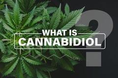 Formule de Cannabidiol CBD, feuilles de marijuana, cannabis croissant indica, vert de fond, cannabis de culture, chanvre CBD photographie stock libre de droits