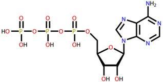 Formule structurelle de l'adénosine triphosphate (triphosphate d'adénosine) illustration stock