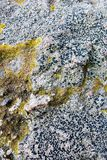 Formyttersida av en sten Arkivbild