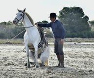 Fornal pokazuje Białego Camargue konia Zdjęcie Royalty Free