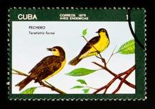 Fornsi di Teretistris della silvia di Oriente, serie locale degli uccelli, circa 1976 Immagini Stock Libere da Diritti