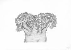 Forntida afrikanskt Baobabträd Royaltyfri Bild
