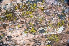 Forntida Anasazi Pueblo Arkivfoton