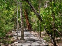 Forntida bana till och med den mexicanska djungeln i Calakmul royaltyfri fotografi