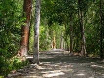 Forntida bana till och med den mexicanska djungeln i Calakmul arkivbild