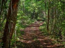 Forntida bana till och med den mexicanska djungeln i Calakmul arkivfoto