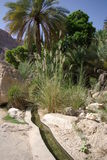 Forntida bevattning i Oman Arkivbild
