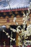 forntida blommatheatrewhite Arkivbilder