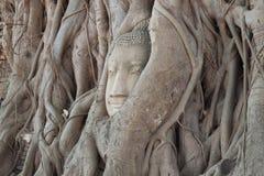forntida buddha huvud royaltyfria foton