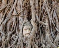 Forntida buddha huvudstaty i Ayutthaya, Thailand arkivfoton