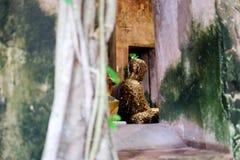 Forntida Buddhastaty i gammal kyrka Arkivfoto