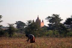 forntida burmese pagoda Arkivbilder