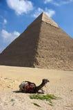 forntida cairo cheopsegypt giza stor pyramid Fotografering för Bildbyråer