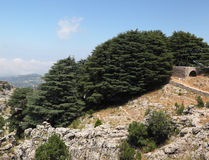 forntida cederträkyrkadunge lebanon Royaltyfri Fotografi