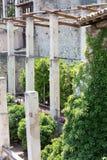 Forntida citronlantgård Fotografering för Bildbyråer