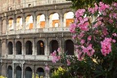 forntida colosseum rome för amphitheater Arkivbilder