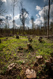 Forntida coppiced skogsmark Arkivfoton