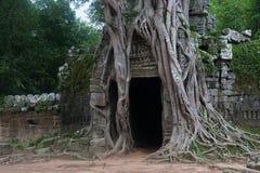 Forntida dörr som är intrasslad med gamla träd omkring i mossig Ankgor wat royaltyfri foto