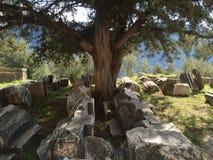 Forntida Delphi Arkivbilder