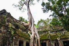 Forntida det stenkonstruktion och trädet rotar, templet för Ta Prohm fördärvar, Angkor, Cambodja Royaltyfri Foto
