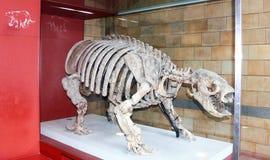 Forntida djurt skelett royaltyfri bild