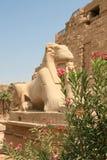 Forntida Egypten staty Royaltyfria Bilder