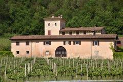 Forntida Franciacorta vinlantgård - Italien royaltyfri foto
