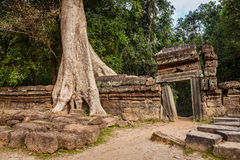 Forntida fördärvar, och trädet rotar, templet för Ta Prohm, Angkor, Cambodja Fotografering för Bildbyråer