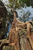 Forntida fördärvar, och trädet rotar, templet för Ta Prohm, Angkor, Cambodja Royaltyfria Bilder