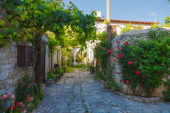 Forntida gata med blommor Arkivbilder