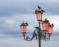 Forntida gatalampa med duvorna i Venedig Royaltyfri Fotografi