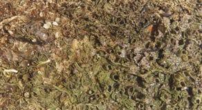 Forntida havsvärld Royaltyfria Bilder
