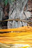 Forntida head Buddha på ett stort träd i tempel Arkivbilder
