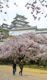 Forntida Himeji slott med den k?rsb?rsr?da blomningen royaltyfria foton