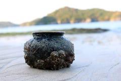 Forntida krukmakeri med havsskalet på stranden Fotografering för Bildbyråer