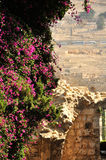 Forntida kyrkogård på Mount of Olives. Jerusalem Royaltyfria Foton
