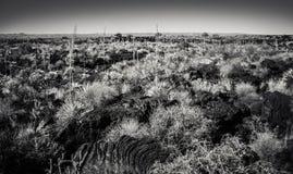 Forntida Lava Flows Arkivfoton