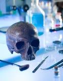 Forntida mänsklig skalle Arkivfoton